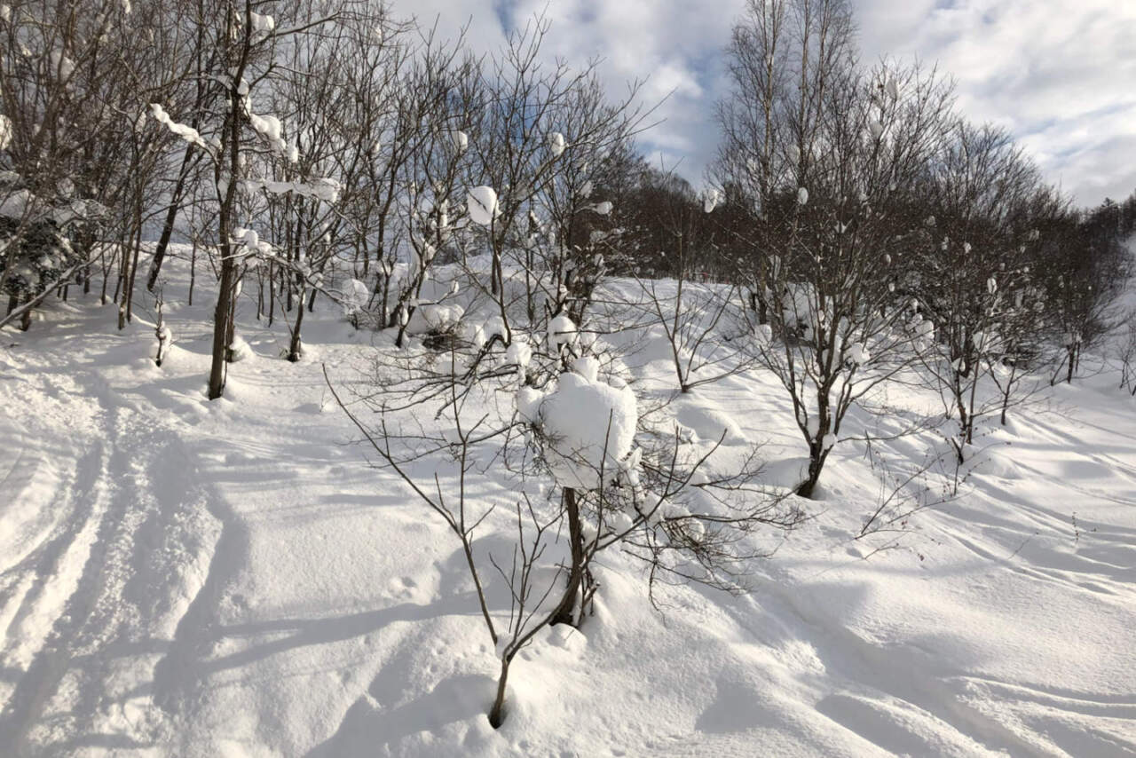 美唄国設スキー場 コース脇